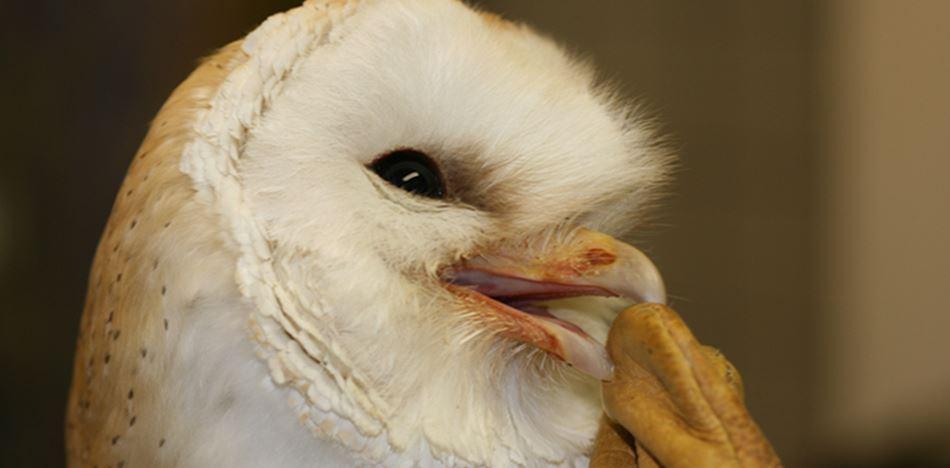 Vogelrevalidatiecentrum Zundert
