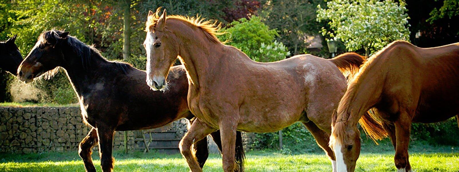 Boerderijfeestje bij De Paardenkamp