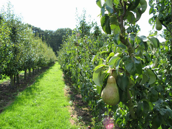 Speurtocht in de Philips Fruittuin